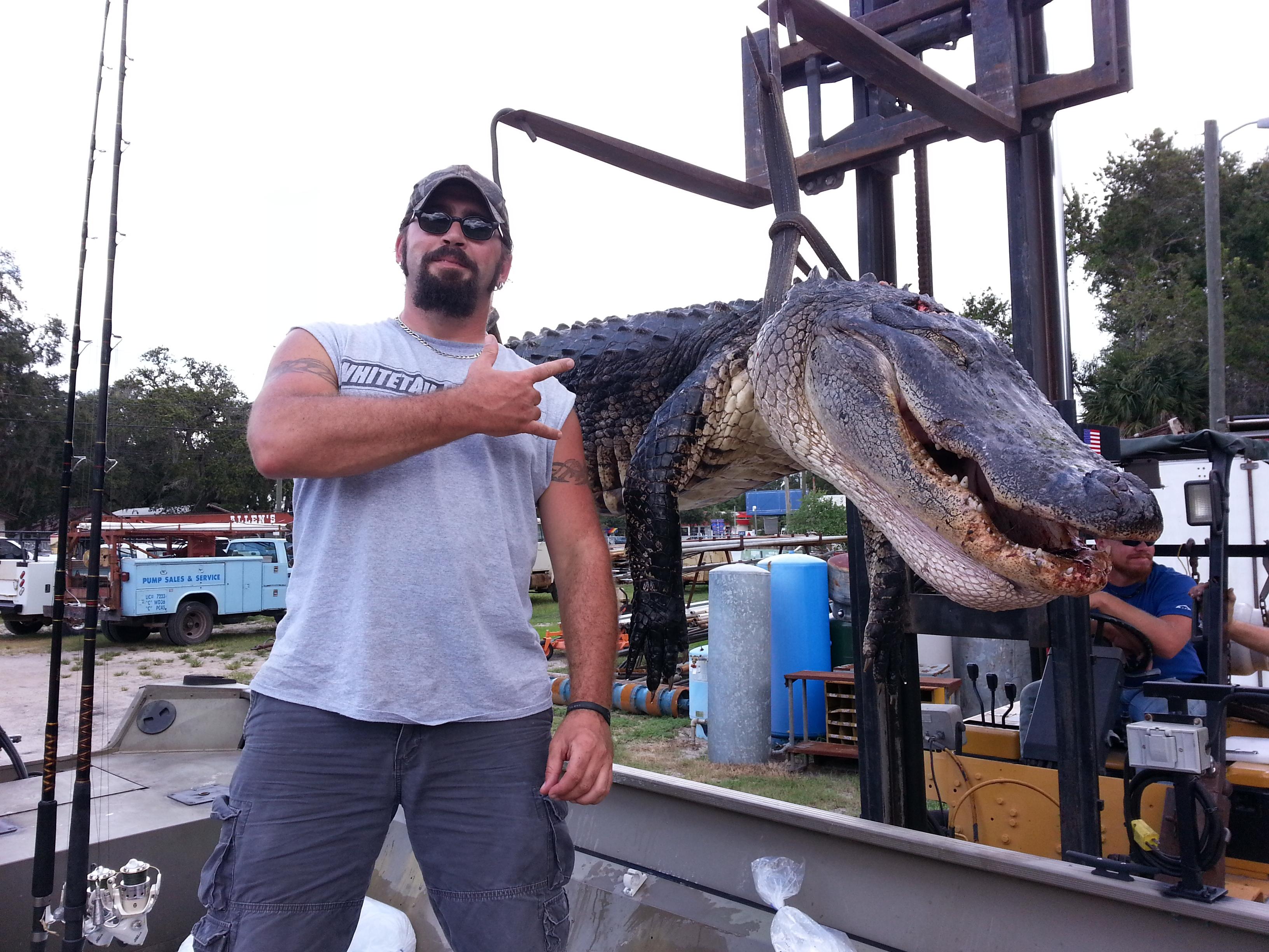 Florida public water gator